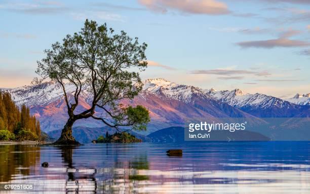 new zealand, south island, otago, wanaka, lone tree of lake wanaka at dusk - wanaka - fotografias e filmes do acervo