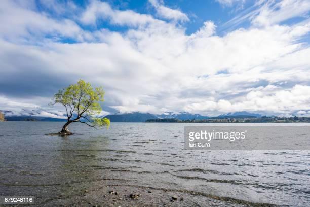New Zealand, South Island, Otago, Wanaka, Lone Tree of Lake Wanaka