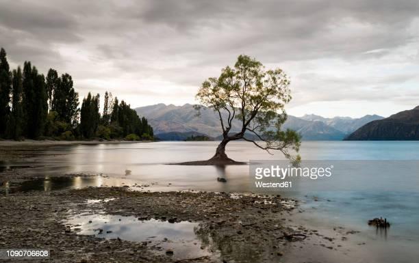 new zealand, south island, otago, wanaka, the wanaka tree - wanaka - fotografias e filmes do acervo