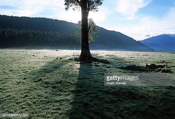 New Zealand, South Island, single tree surrounded by hills outside Mt Apiring National Park