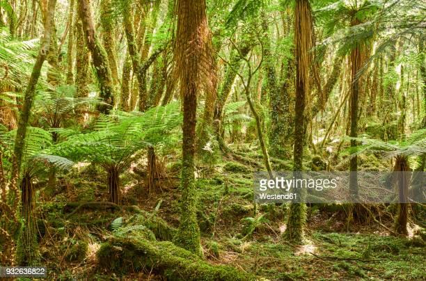 New Zealand, South Island, Westland National Park, rain forest