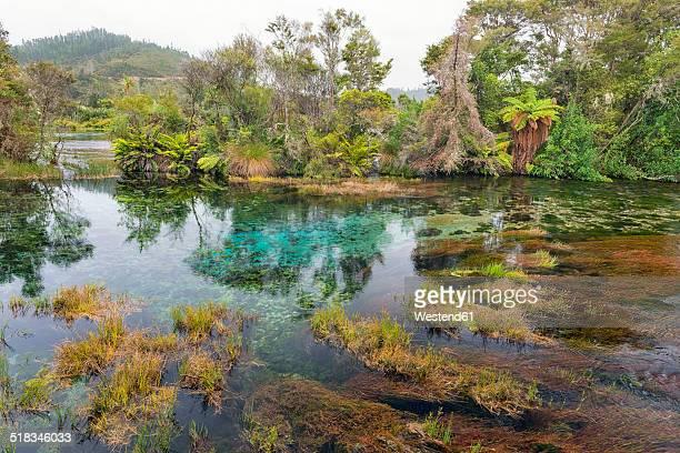 New Zealand, Tasman, Takaka, Te Waikoropupu Springs with vegetation around the freshwater pool