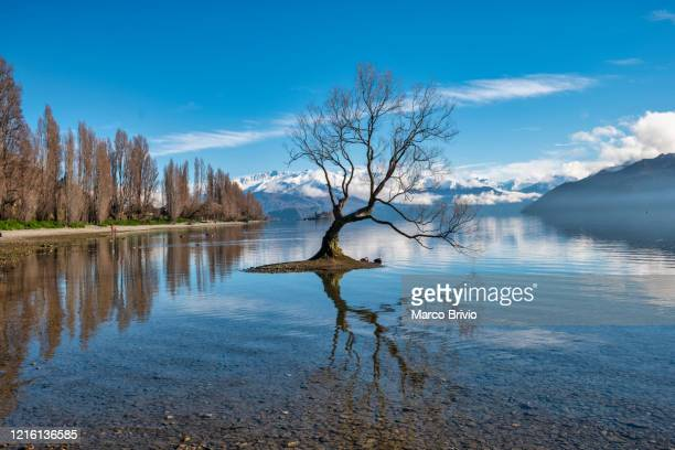new zealand. wanaka. that wanaka tree - marco brivio stock pictures, royalty-free photos & images