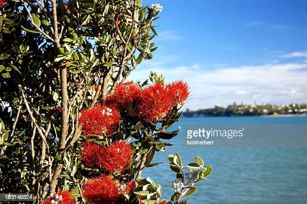 New Zealand Xmas Tree