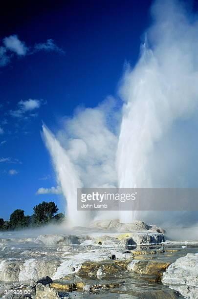new zealand,rotorua,whakarewarewa, pohutu and prince of wales geysers - rotorua stock pictures, royalty-free photos & images