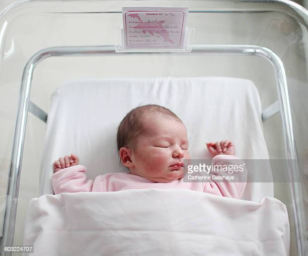 a newborn at the maternity ward - baby girls stock photos and pictures