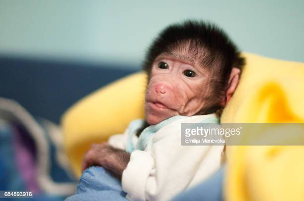 Newborn baboon laying on bed