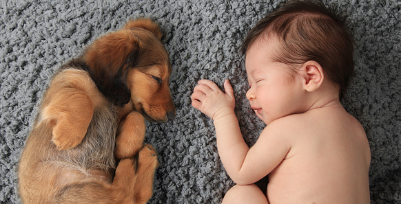 Baby with boxer-dog