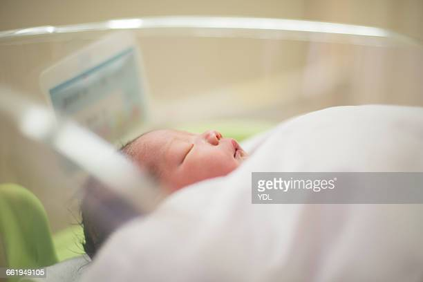 A newborn baby sleeps in an infant incubator.