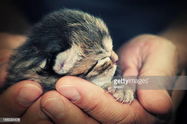 newborn cat