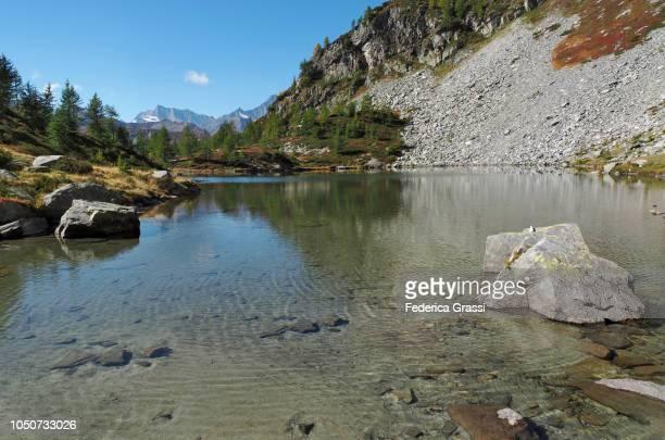 Newborn Fish at Lago di Agro in The High Bognanco Valley