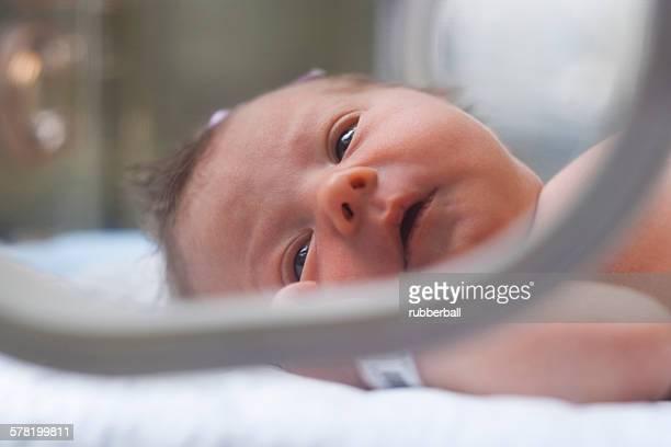 Newborn girl in incubator