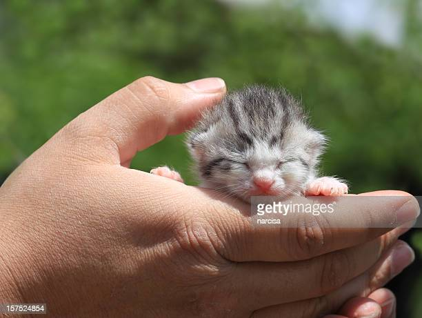 neonato gattino in mano - gattini appena nati foto e immagini stock