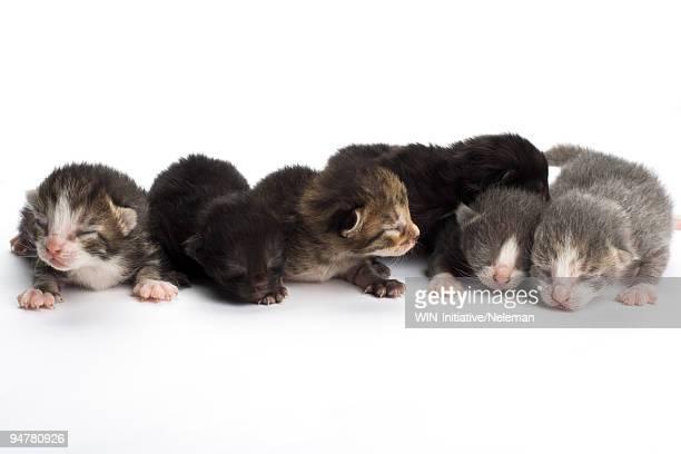 Newborn kittens on a white background
