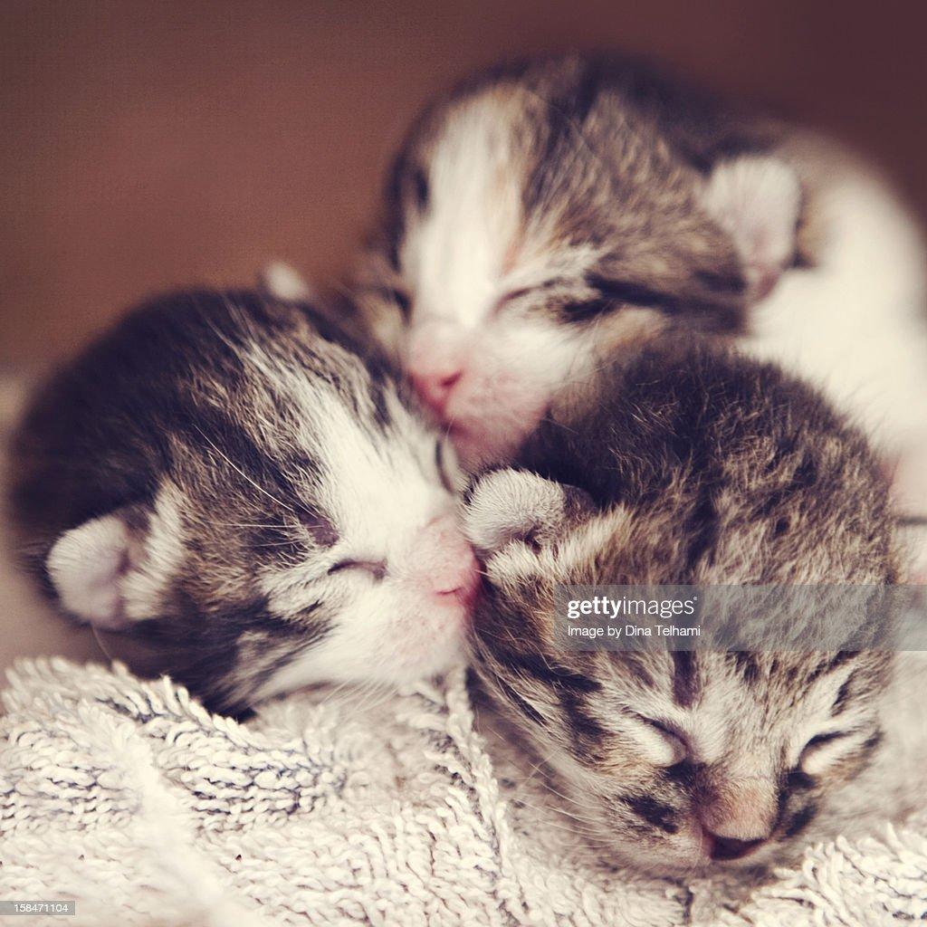 Newborn Kittens : Stock Photo