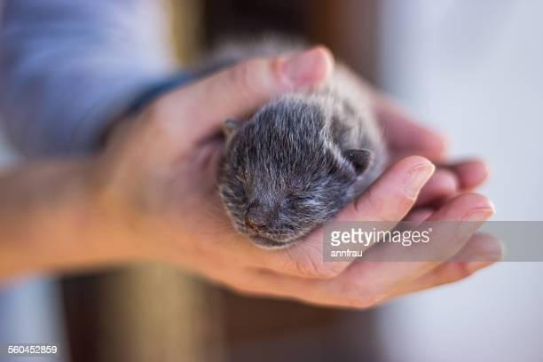 newborn - gattini appena nati foto e immagini stock
