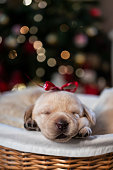 newborn puppies at home