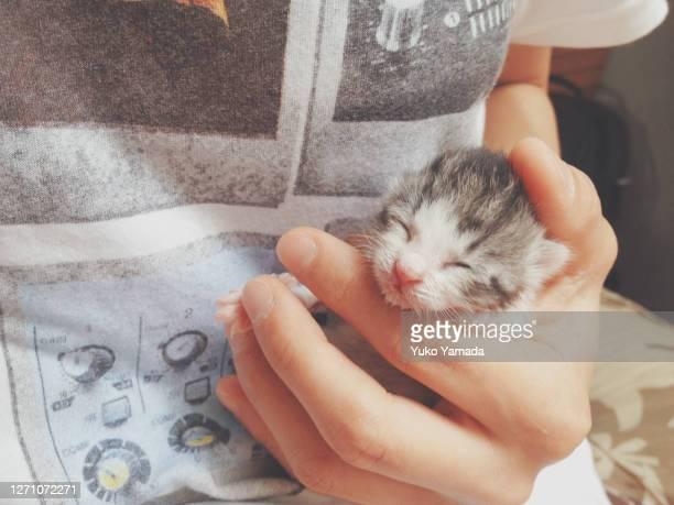 newborn sleeping kitten held by human's hand - gattini appena nati foto e immagini stock