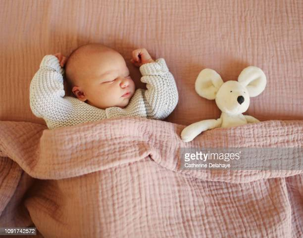 a newborn sleeping with his cuddly toy at home - ぬいぐるみ ストックフォトと画像