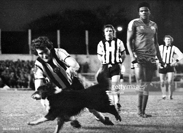 Newcastle United Action - Newcastle United v QPR 15 December 1979 - Peter Withe tries to tackle surprise player - Shep the collie dog