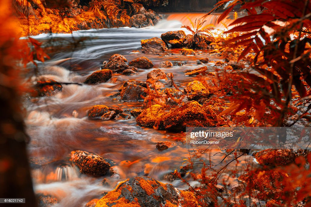 Newell Creek in Tasmania : Stockfoto