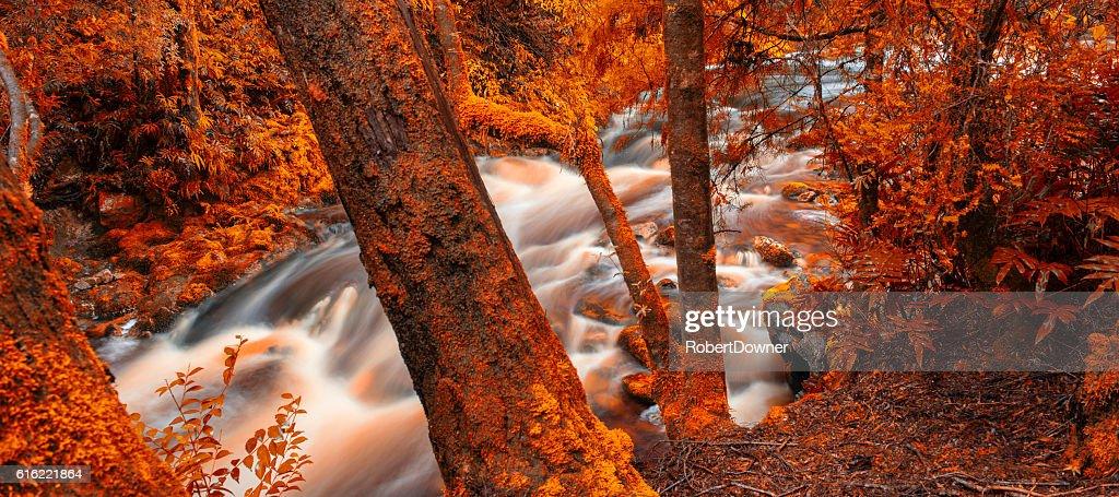 Newell Creek in Tasmania : Foto stock