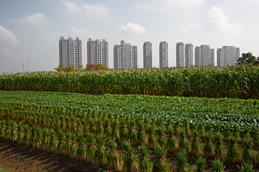 Newly developed block of flats with farmland,Hangzhou,China - gettyimageskorea