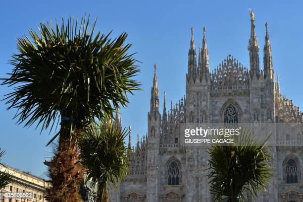 Newly planted palm trees are pictured in front of Italy's landmark the Milan Cathedral at the Piazza del Duomo in Milan on February 16 2017 The...