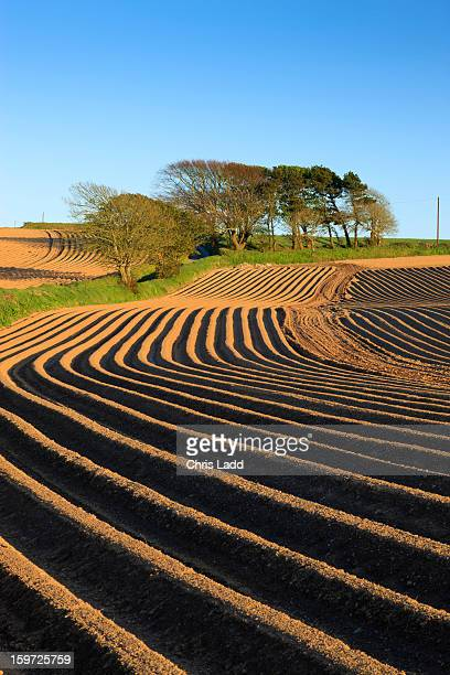 newly planted potato field furrows, pembrokeshire - grooved stock pictures, royalty-free photos & images