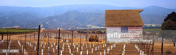 newly planted wine vineyard - timothy hearsum stock pictures, royalty-free photos & images
