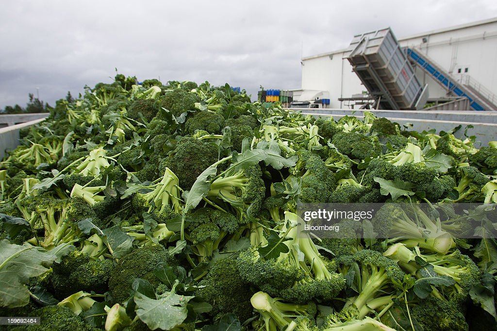 Newly-harvested broccoli spears sit in a trailer before processing at the Monliz-Produtos Alimentares do Mondego e Liz SA frozen food factory in Alpiarca, Portugal, on Friday, Jan. 18, 2013. Portuguese Prime Minister Pedro Passos Coelho says he does not want Portugal to get a second rescue program. Photographer: Mario Proenca/Bloomberg via Getty Images