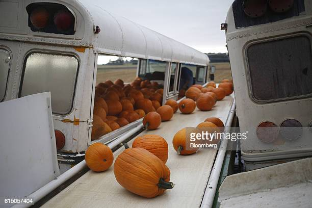 Newlyharvested jacko'lantern pumpkins move down a conveyor belt at a Frey Farms Inc processing facility Poseyville Indiana US on Thursday Oct 13 2016...