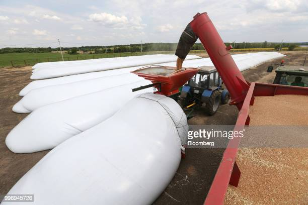 Newlyharvested wheat is loaded into polyethylene bags for storage on a farm operated by Ros Agro Plc in Kazinka village outside Belgorod Russia on...