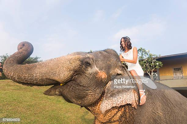 Newlywed bride riding an elephant, outdoors