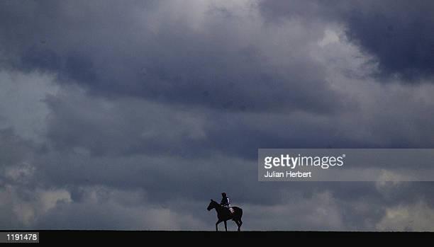 newmarket racing x - horse racing ストックフォトと画像
