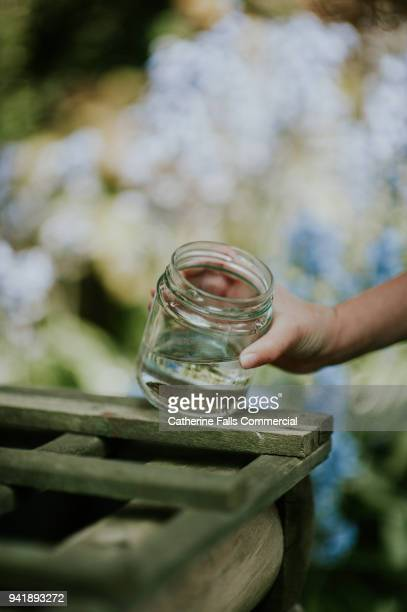 newt in a jar - aquatic organism stock pictures, royalty-free photos & images
