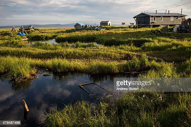 Newtok homes are seen situation amongst ponds and tall grass on July 3 2015 in Newtok Alaska Newtok is one of several remote Alaskan villages that is...