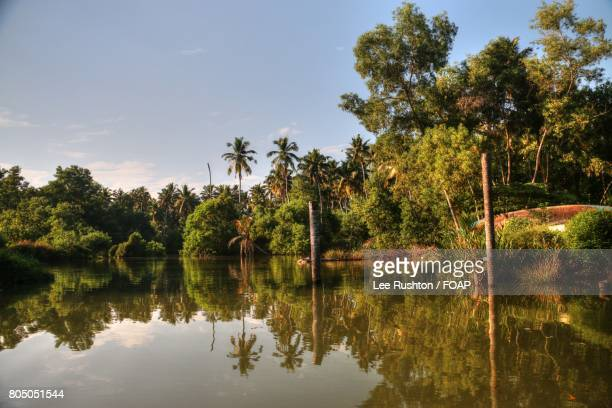 neyyar dam with trees, kerala in india - thiruvananthapuram stock photos and pictures