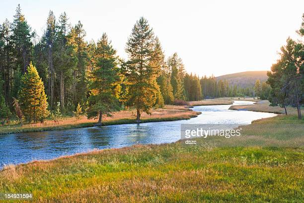nez perce creek im yellowstone national park bei sonnenuntergang - flussufer stock-fotos und bilder