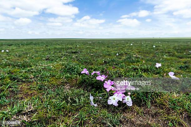 A bouquet of small pink Tissue Paper flowers contrast against the green grass of the savannah plain.