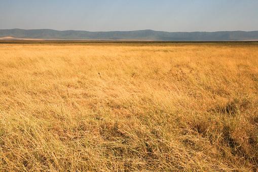 Ngorongoro Crater landscape, Tanzania. 865625060