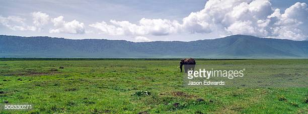 A solitary African Elephant walking across the vast floor of a volcano caldera.