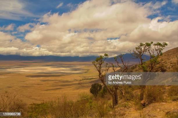 ngorongoro crater, ngorongoro conservation area, tanzania - ngorongoro conservation area stock pictures, royalty-free photos & images