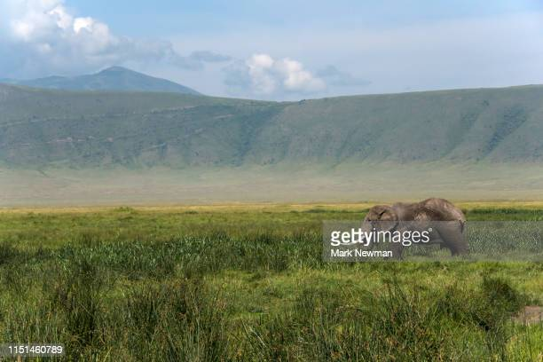 ngorongoro national park landscape - national recreation area stock pictures, royalty-free photos & images