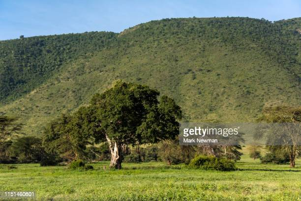 ngorongoro national park - national recreation area stock pictures, royalty-free photos & images