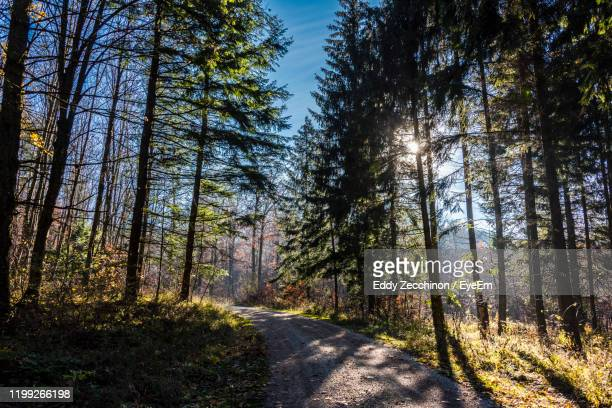 nice autumn mood. forest in autumn colors. quiet forest nature no man, nice light mood. - baden württemberg stock pictures, royalty-free photos & images