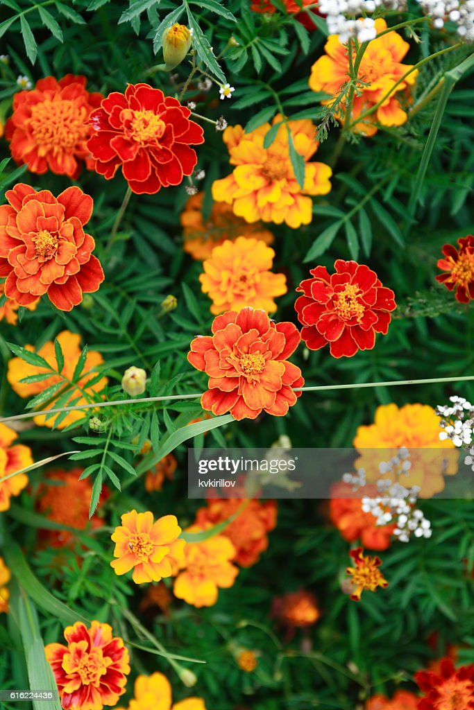 Nice Orange Flowers : Stock Photo