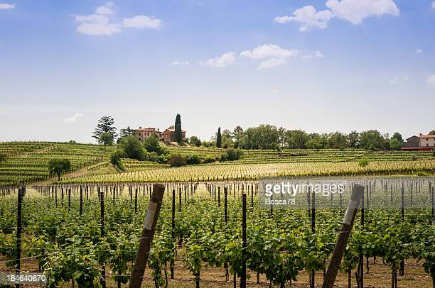 Nice vineyard landscape in north of Italy