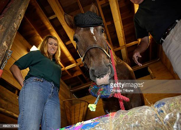 Nick a 22 yearold appaloosa clydesdale cross paints at the Danada Equestrian Center in Wheaton Ill on Wednesday August 26 2015 Nick has been taught...