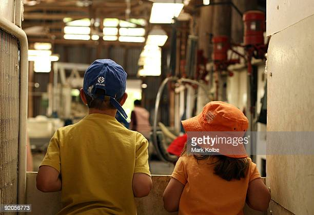 Nick and Emma Page watch during spring shearing at Cherry Hill Pastoral Company property on October 19 2009 in Uralla Australia Shearing in Australia...